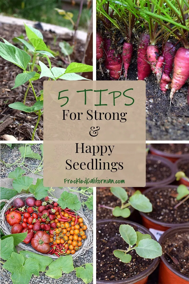 Seedling Care Tips 5 Ways To Promote Stronger Healthier Seedlings With Images Seedlings Starting A Garden Growing Seedlings