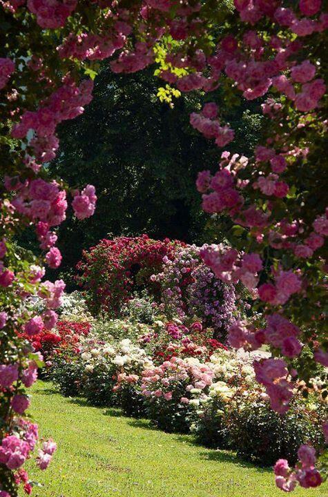 Rose garden flores hermosas Pinterest Jardines, Jardín y