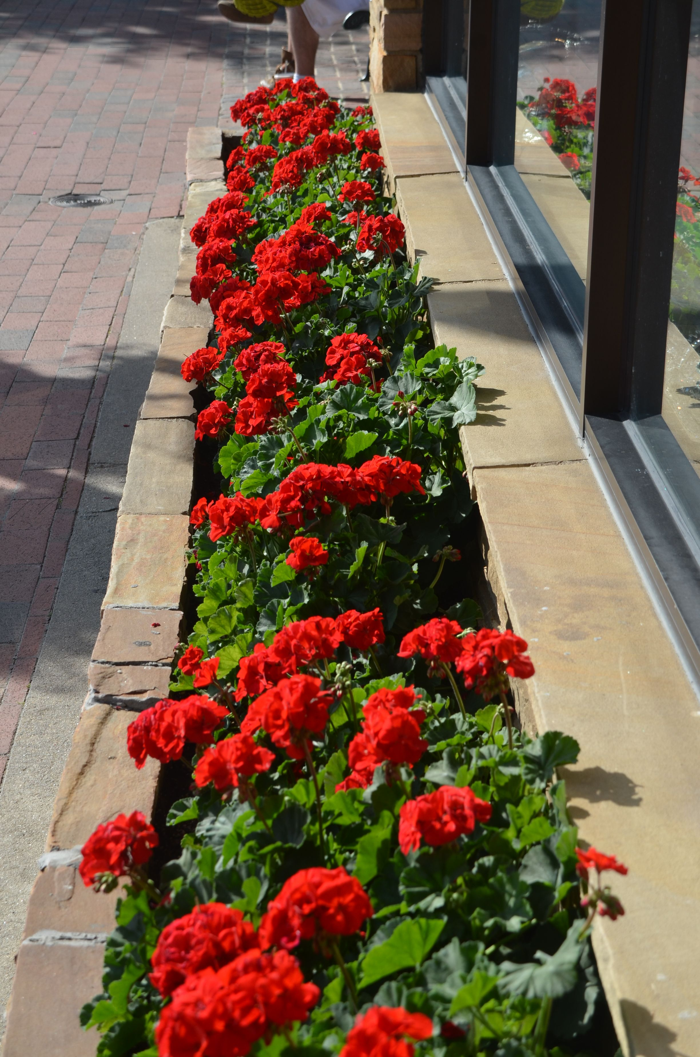 Main street shopping in highlands nc red geraniums line
