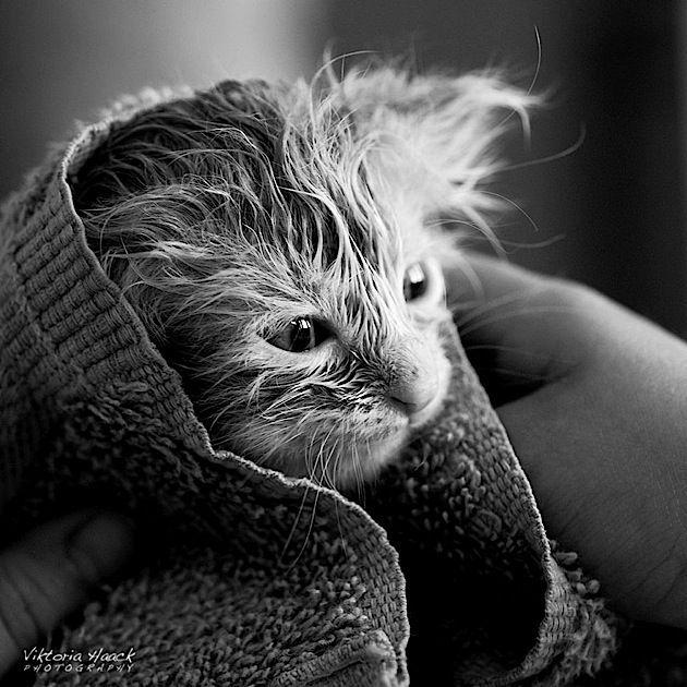 Fotografie Bluten In Schwarz Weiss Von Tomoya Matsuura Coole Katzen