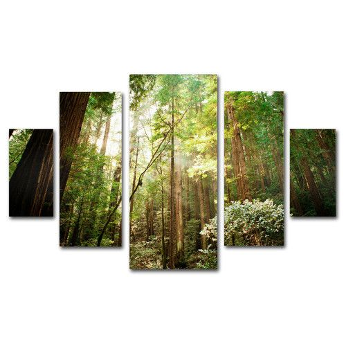 """""""Muir Woods"""" by Ariane Moshayed 5 Piece Gallery Wrapped Photographic Print on Canvas Set"""
