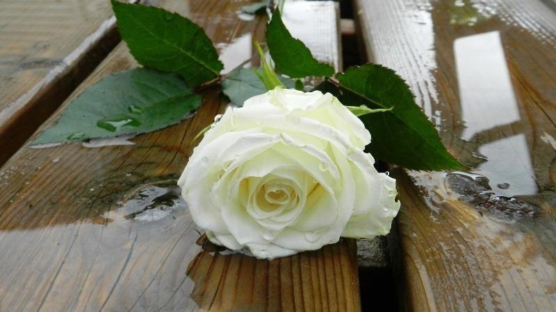 Pour l'amour d'une rose, le jardinier est le serviteur de mille épines. http://voyance-immediate-par-mail.eu