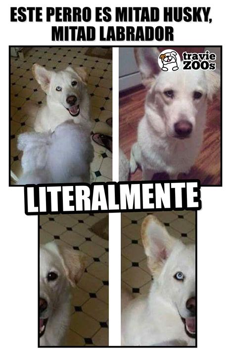 Dos Razas En Una Memes Perros Perros Graciosos Perros Chistosos