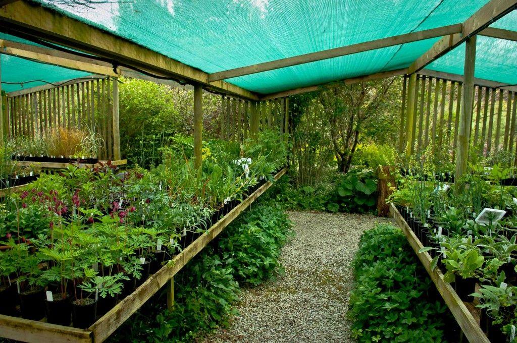 Wychwood Nursery Selection Garden Center