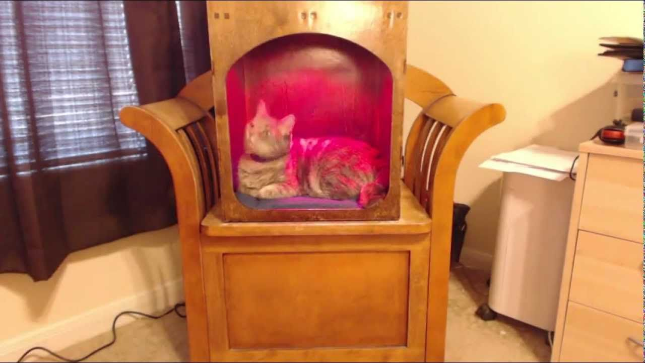 Automatic Heated Cat Bed Kind Of Judging Kind Of Want It Heated Cat Bed Cat Bed Wooden Cat