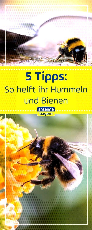 Bumblebees help spoons of sugar and water work wonders, Bumblebees help spoons of sugar and wate