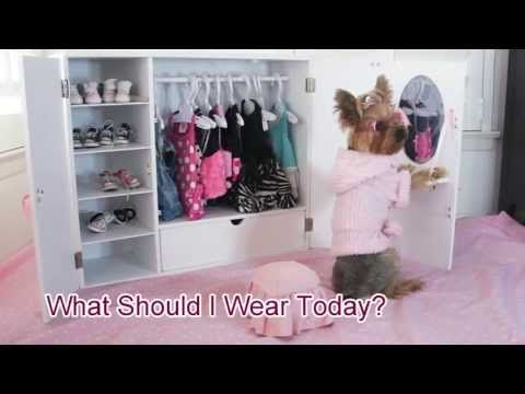 Doggie Closet Funny Video Of Dog Chloe Polka Dot Yorkie Youtube With Images Dog Closet Dog Clothes Diy Funny Dog Videos