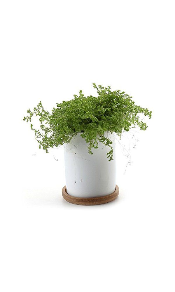 T4u 2 75 Inch Ceramic White Cylinder Succulent Plant Pot Cactus With Bamboo Tray