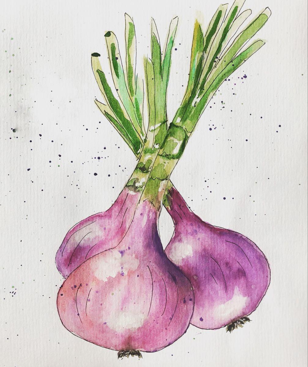 Onion #onion #watercolor #watercolorpainting #watercolorart #illustration #watercolorsketch #sketch #watercolorillustration #акварель #скетч #акварельныйрисунок