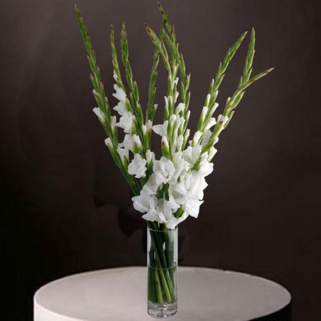 Gladiolus on myös ihana kukka, niitä on paljon tällä hetkellä kukkkakaupoissa.
