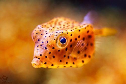 orange you gonna kiss me? ... fish lips ;-) ...