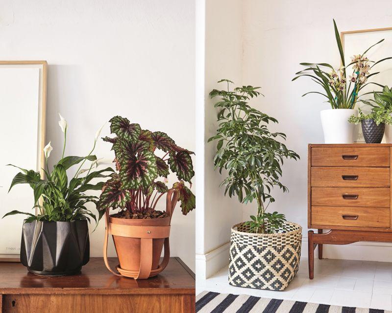 Versier jou huis met plante met
