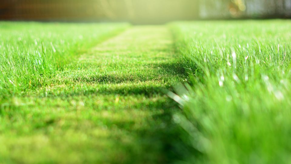 Awesome alternatives to conventional lawns lawn and