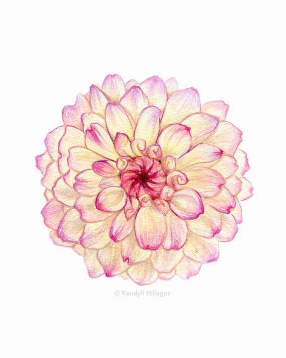 0bb9281eb7fec Pink Carnation // Botanical Illustration // Floral, Pink | Tattoos ...