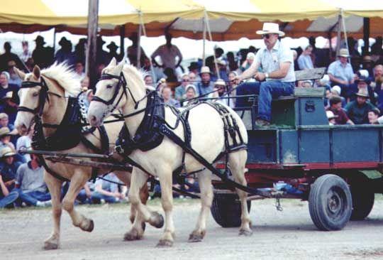 American Cream Draft Pair Pulling Wagon At Horse Progress Days In Iowa Horses Draft Horses Horse Paddock