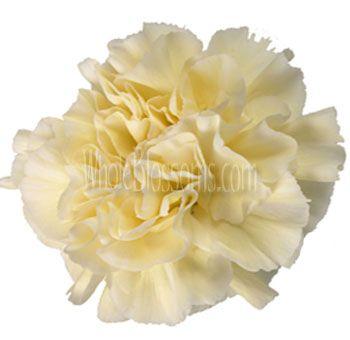 Cream Carnations As Centerpiece Bouquet Fillers Carnation Flower Carnations Cream Flowers