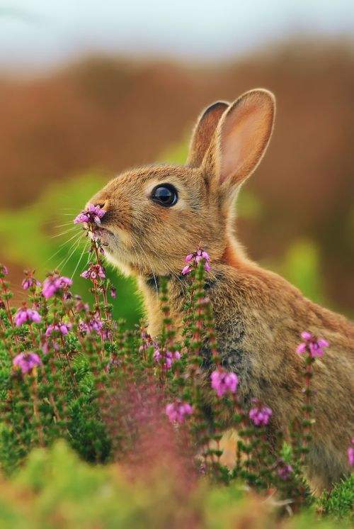 (°ω°) bunny on flower
