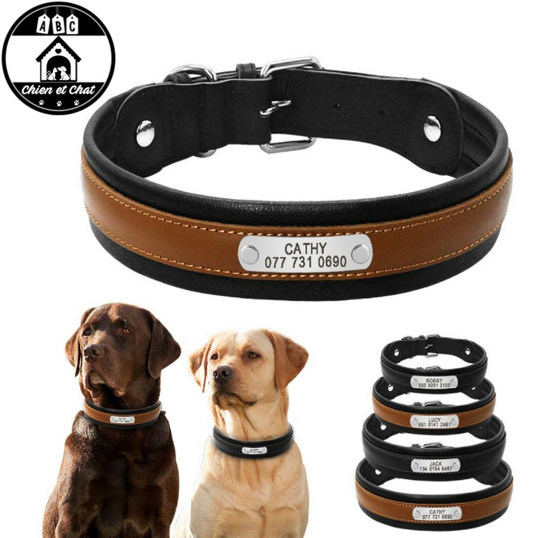 collier pour chien avec pic