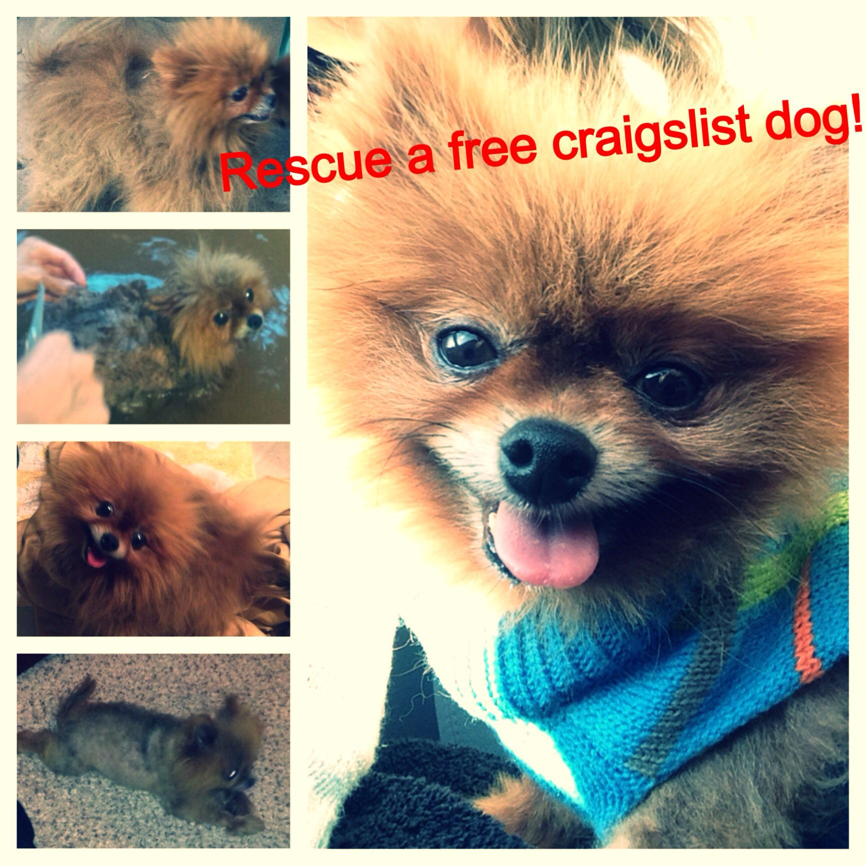 Dogs That Are Given Away On Craigslist Are Often Taken And Used As