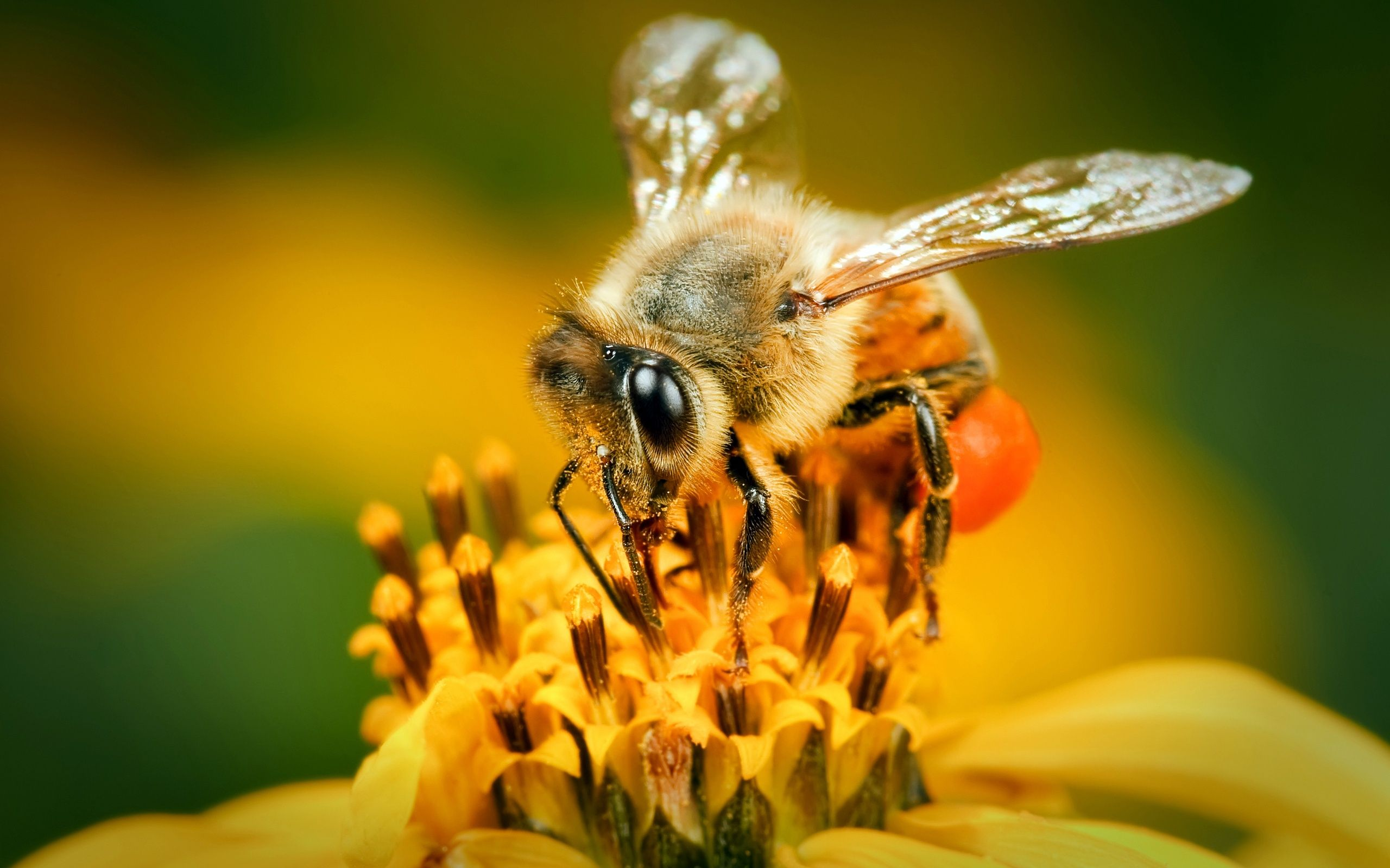 bee mobile Yahoo Image Search Results Bee, Spring