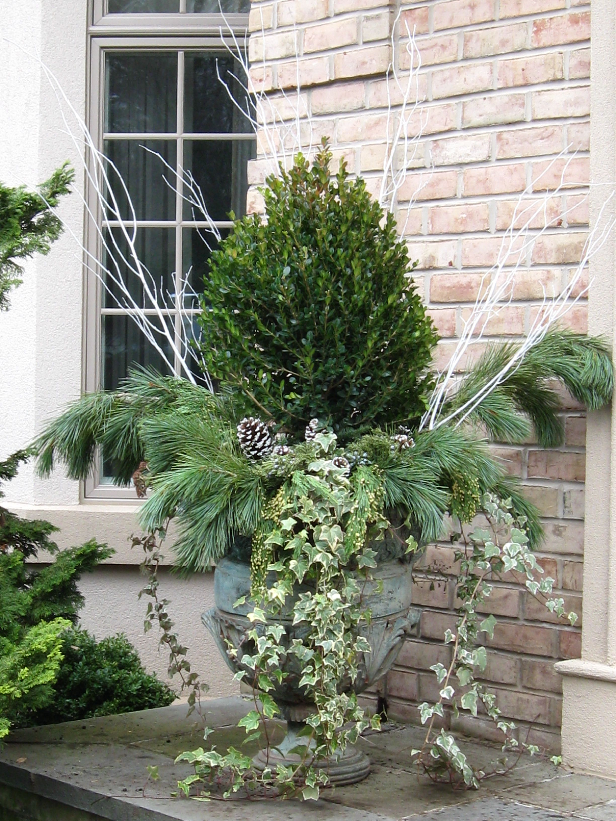 use ivy in winter garden container  fall planters  box wood  ivy and pine