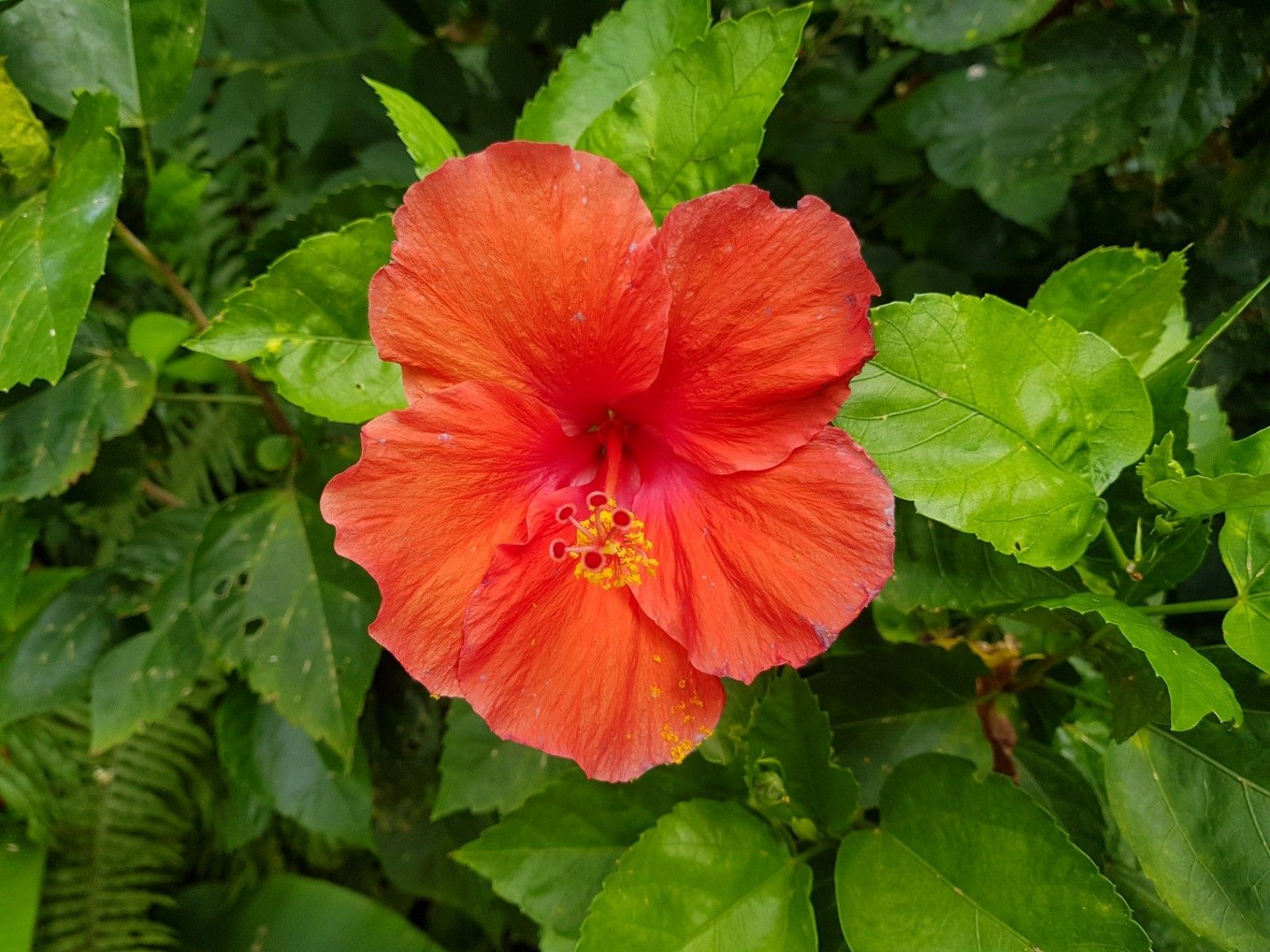 Famous Tropical Hibiscus Flower A Flowering Woody Shrub That Has Several Species And Cultured As Ornamenta Nature Photography Flowers Hibiscus Flowers Flowers