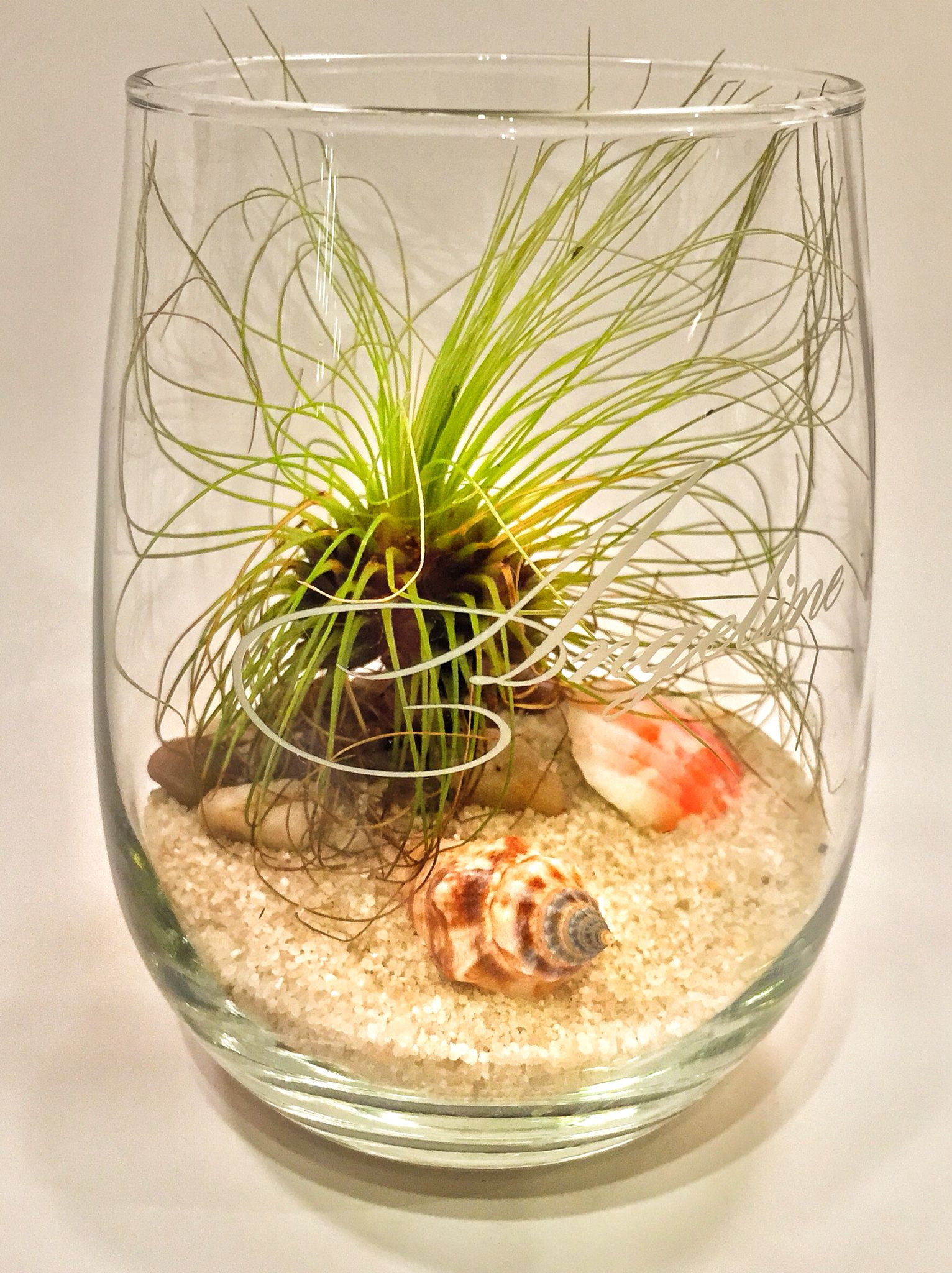 Beachy Terrarium With Air Plant And Sea Shells In An