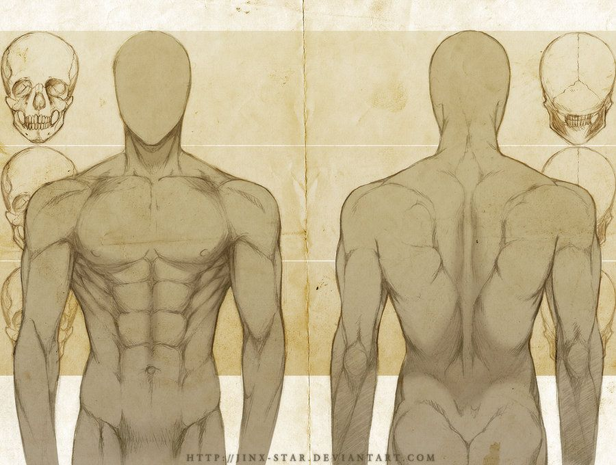 Pin de Dionne Rosana-Astrande en Male Anatomy & Reference ...