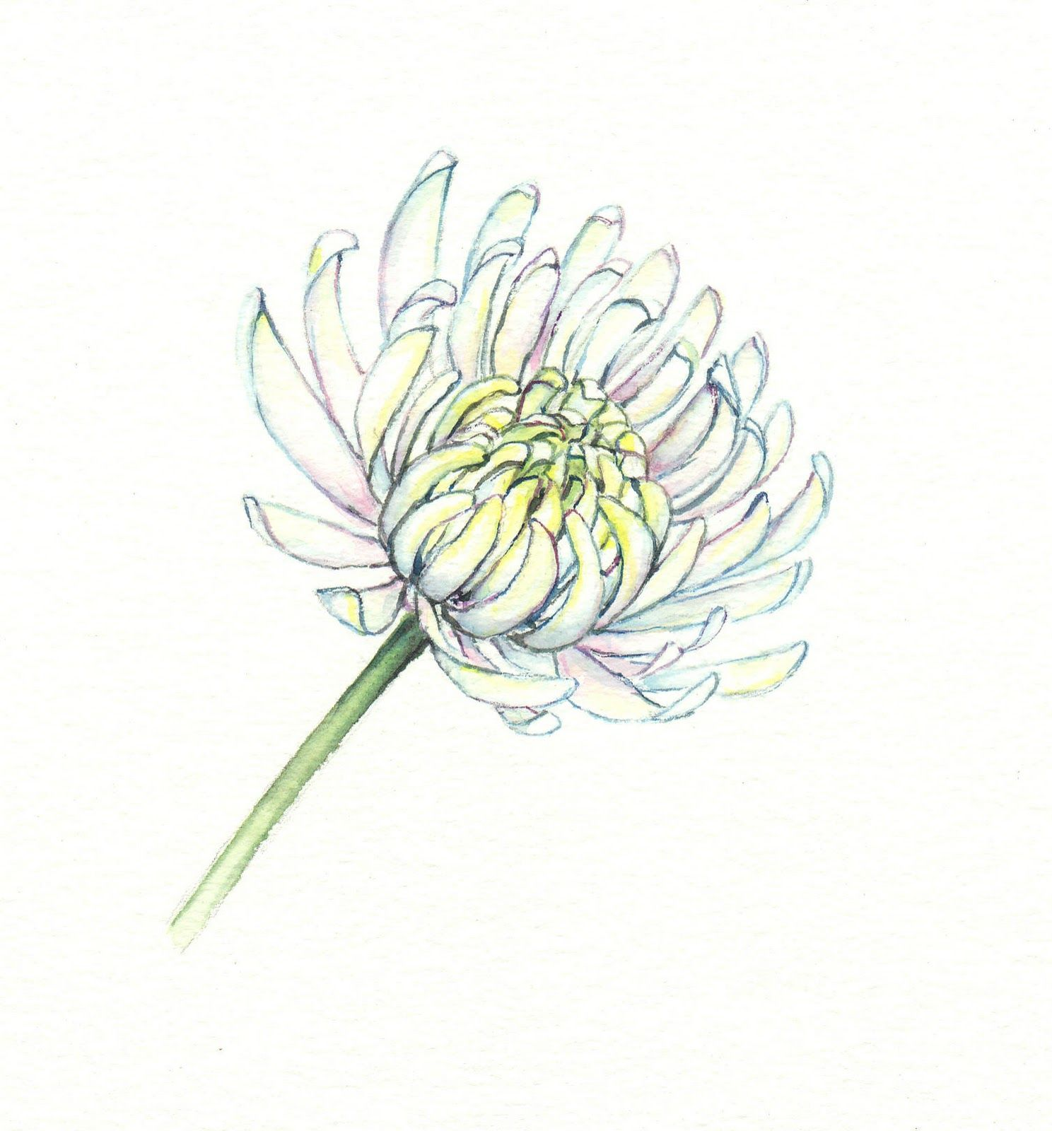 Aster Flower Drawing Flower Drawing Aster Flower Tattoos Birth Flower Tattoos