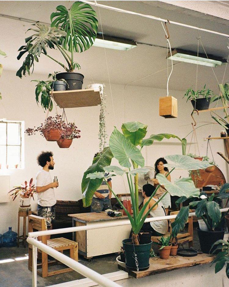 pin by laurette plantes vertes on bureau de travail office pinterest plants interiors and. Black Bedroom Furniture Sets. Home Design Ideas