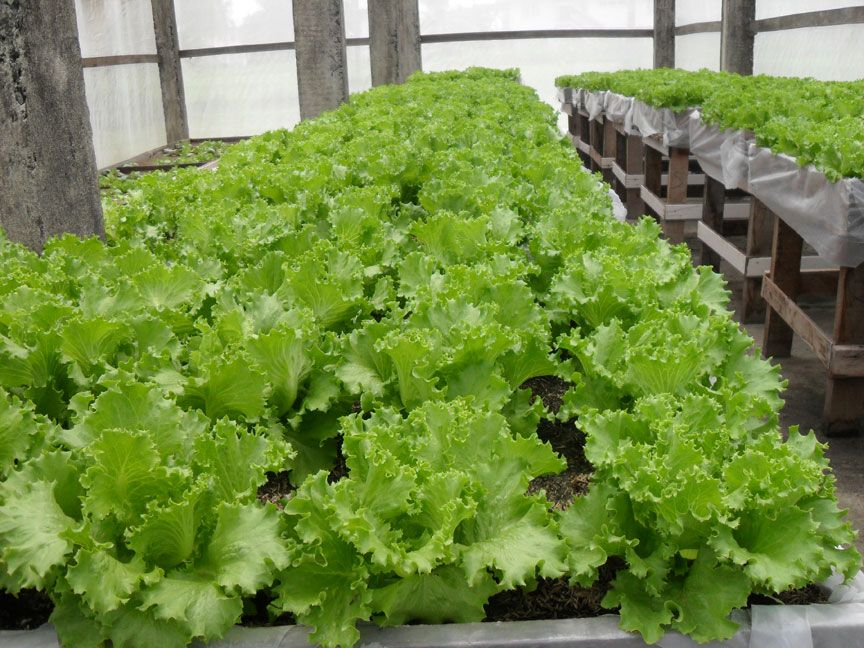 Nari Pushes Hydroponics Farming Montage