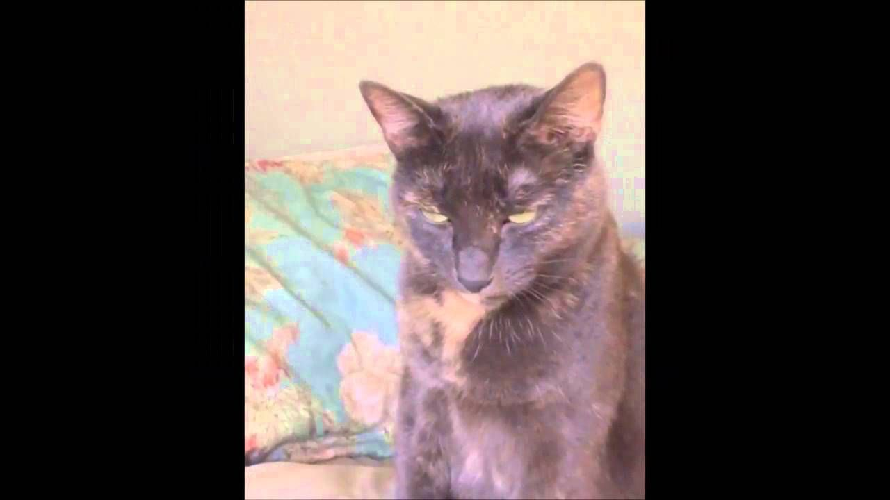 Video About Cat Keeps Sneezing Compilation Via Http Youtu Be 0wtzjcrck0m Cats Cat Sneezing Cat Gif