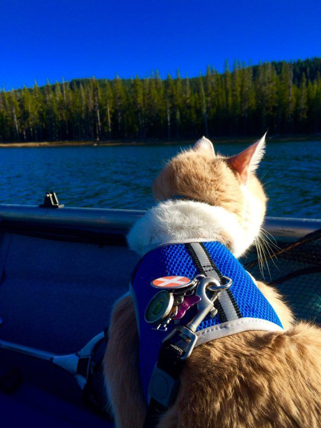 Diego loves taking boat trips with his fur mama DeAnn. The two are inseparable! Read more about them in our latest feature.