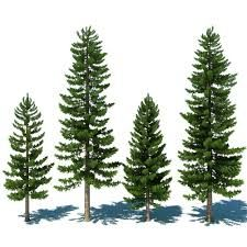 pines - Buscar con Google