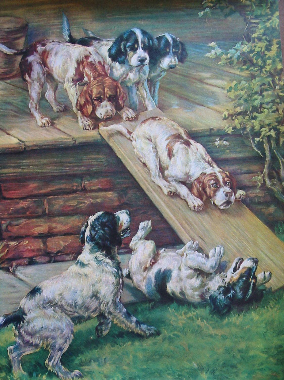 Vintage English Springer Spanie Lprint Dogs Pets Springerspaniels Puppies Facebook Com Sodoggonefunny Spaniel Art Springer Dog Puppy Nursery