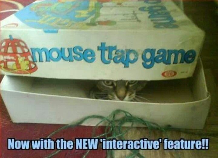 Mouse Trap Funny Cat Photos Funny Cat Memes Mouse Trap Game