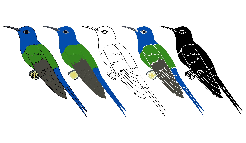 Hummingbird colibri bird in profile view em 2020 Vetores