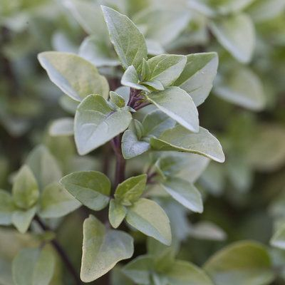 32 indispensable herbs