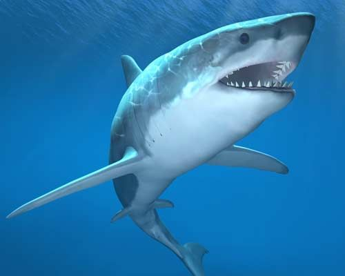 US Shark Attack teen tells of losing Arm | Fountain Facts