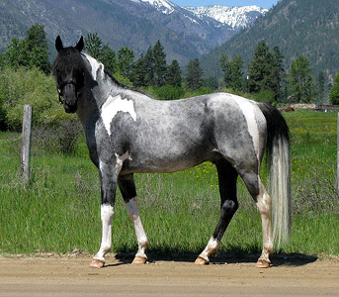 Rare & Unusual Colored Horses