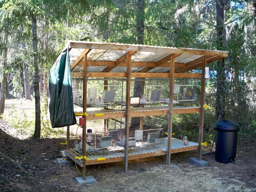 Pin By Ayla Ricci White On Farm Animals Meat Rabbits Rabbit Cages Rabbit Shed