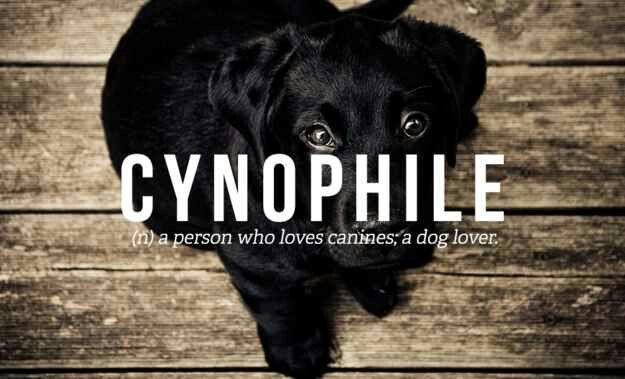 Cynophile Weird Words Pretty Words Words