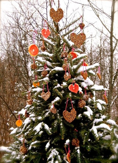 Decorate An Outdoor Holiday Tree For Animals Outdoor Christmas Tree Decorations Christmas Tree Decorations Outdoor Christmas Decorations