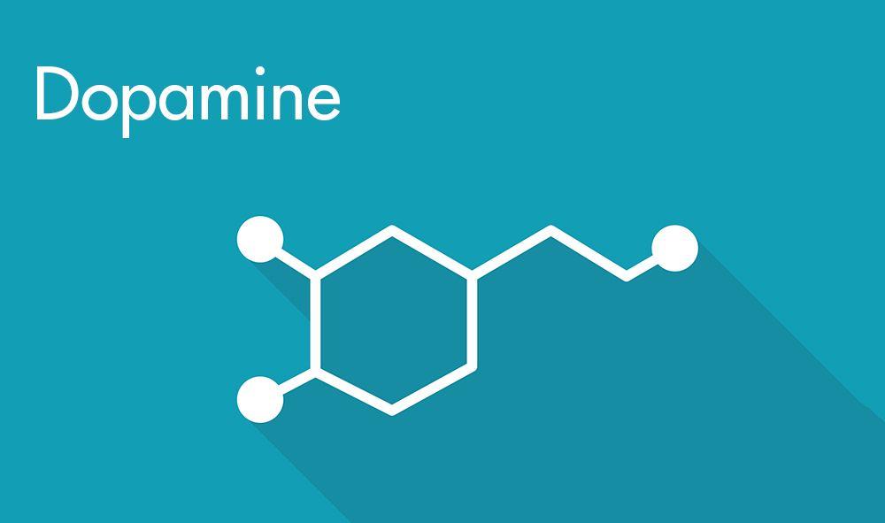 Selain berkontribusi untuk mood yang baik, dopamin juga berperan dalam berbagai sistem tubuh