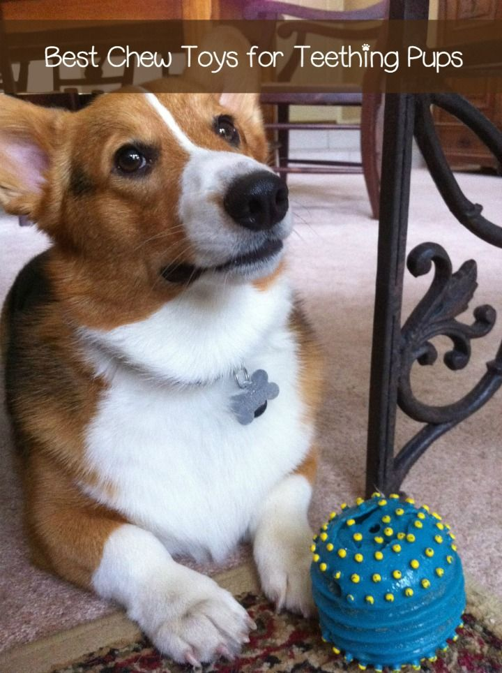 The Best Chew Toys For A Teething Puppy With Images Pembroke Welsh Corgi Puppies Corgi Puppies