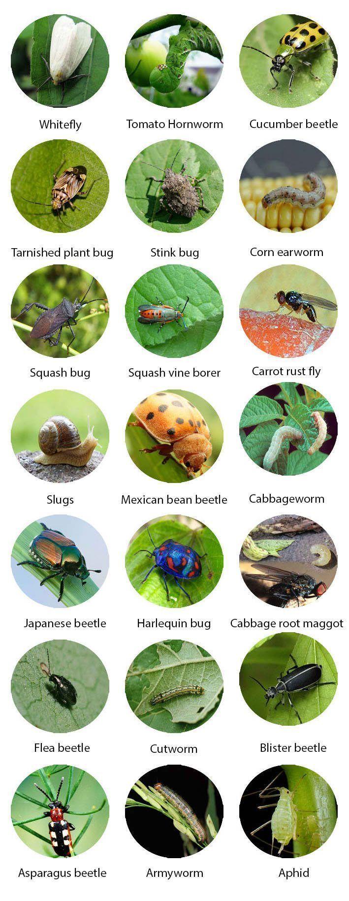 Garden Insects Identification - Garden Design Ideas