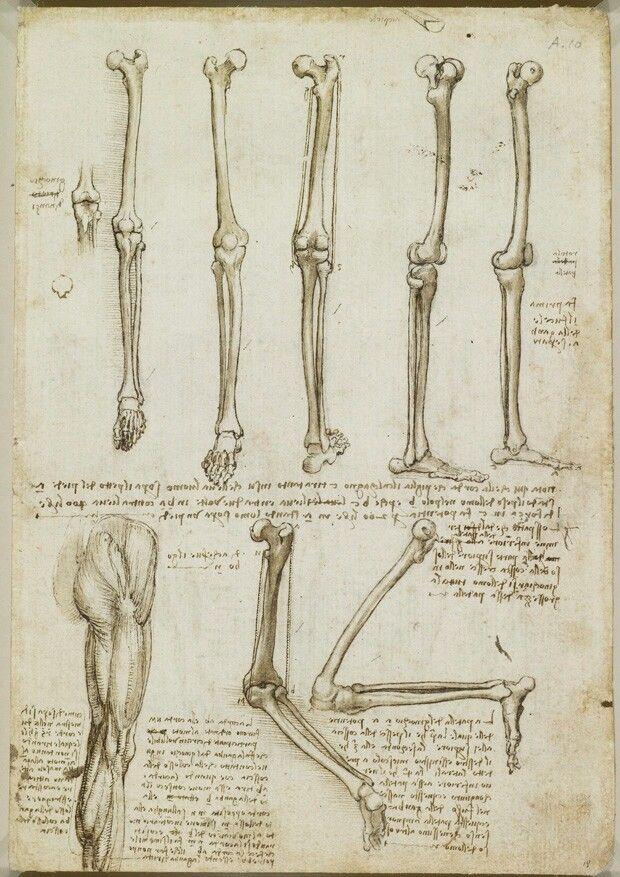 Leonardo Da Vinci anatomical sketches/drawings ca. 1485-1515 | legs ...