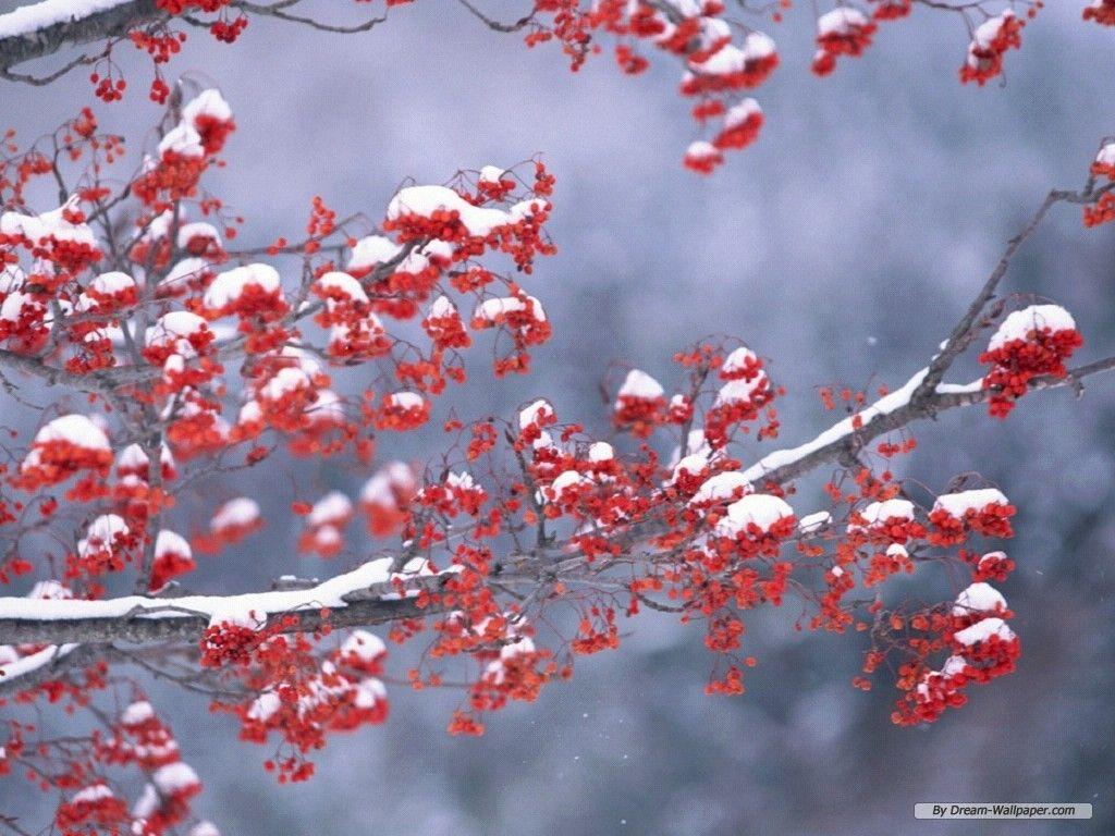 free nature wallpaper - season winter wallpaper - 1024x768 wallpaper