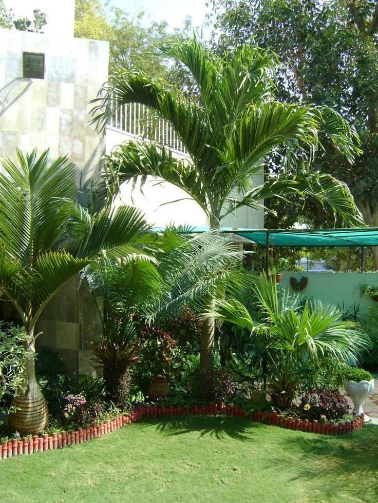 Tropical garden tropical gardens exotic lush tropical for Jardines pequenos tropicales