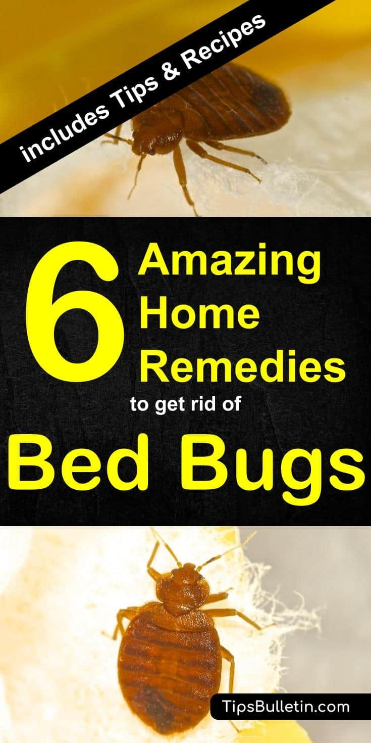 6 Home Remedies to Get Rid of Bed Bugs [Incl. Recipes